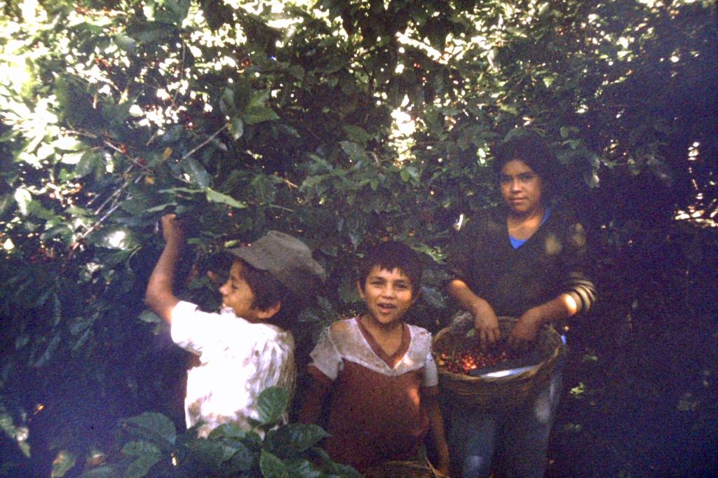 07 - kids picking coffee